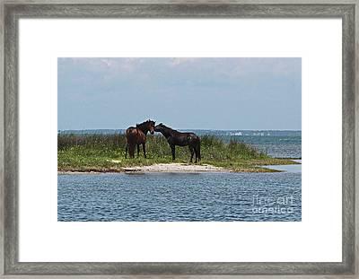 Shackleford Ponies 4 Framed Print by Cathy Lindsey