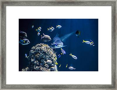 Shark Hunting Framed Print by Jaroslaw Grudzinski