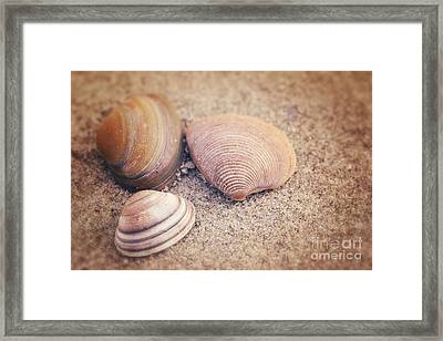 Shells  Framed Print by LHJB Photography