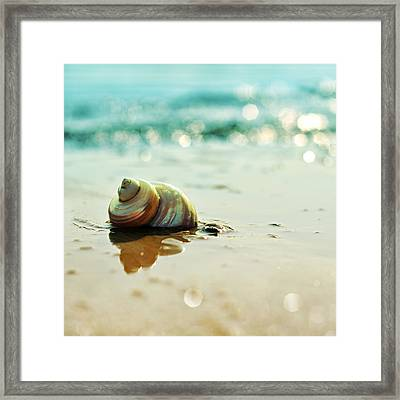 Shore Dweller Framed Print by Laura Fasulo