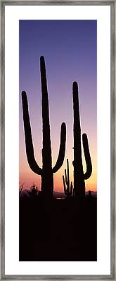 Silhouette Of Saguaro Cacti Carnegiea Framed Print by Panoramic Images
