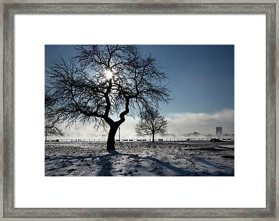 Silhouetted Tree In Winter Framed Print by Jim West