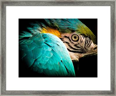 Sleeping Beauty Framed Print by Karen Wiles