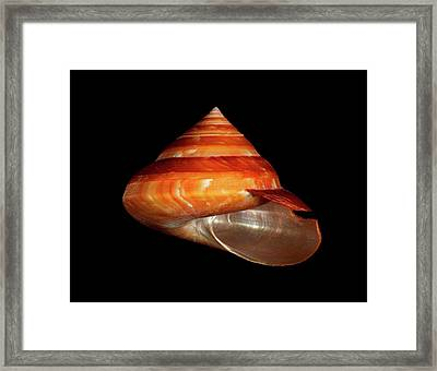 Slit Snail Shell Framed Print by Gilles Mermet