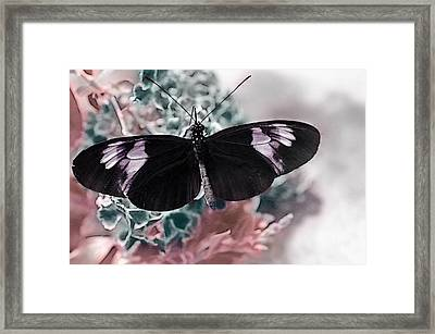 Small Postman Butterfly Framed Print by Marianna Mills