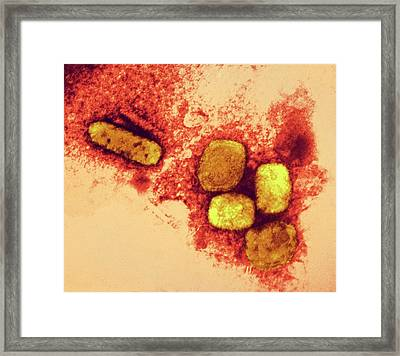 Smallpox Virus Particles Framed Print by Ami Images/dr. Kenneth L. Herrmann