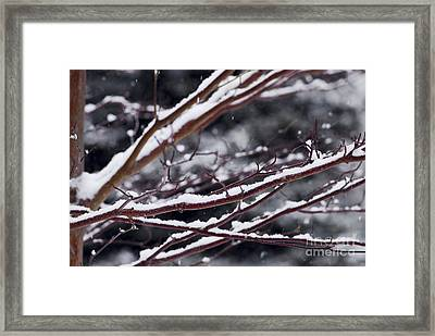 Snowfall And Tree Framed Print by Elena Elisseeva