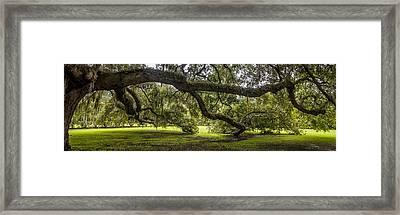 Southern Charm Framed Print by Steve DuPree