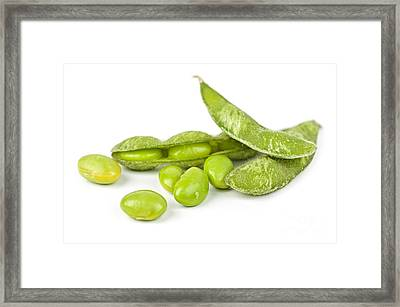 Soy Beans Framed Print by Elena Elisseeva