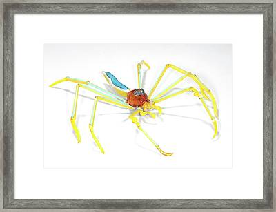 Spider Framed Print by Tomasz Litwin