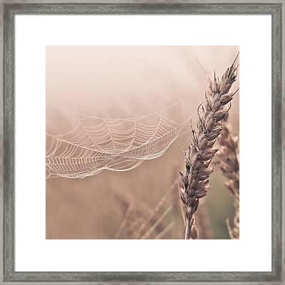 Autumn Spider Web On Grain Framed Print by Aldona Pivoriene