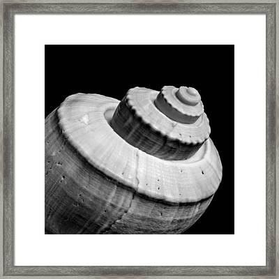 Spiral Sea Shell Framed Print by Jim Hughes