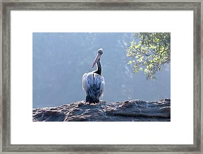 Spot-billed Pelican Framed Print by K Jayaram