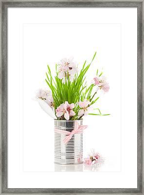 Spring Framed Print by Amanda Elwell