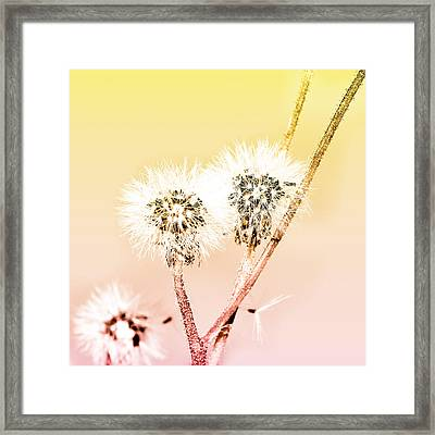 Spring Dandelion Framed Print by Toppart Sweden