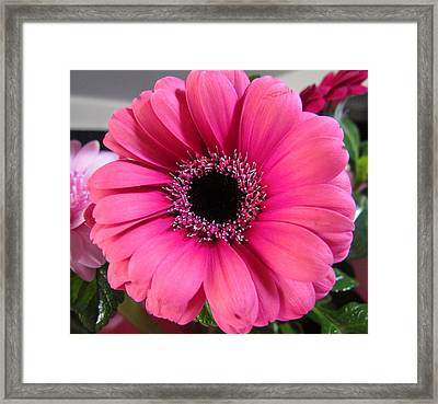 Spring Flower Framed Print by Joyce Woodhouse