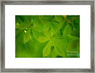 Spring Green Framed Print by Nailia Schwarz