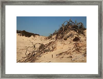 St Joseph Sand Dunes Framed Print by Adam Jewell