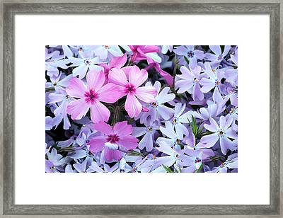 Standing Out Framed Print by JC Findley
