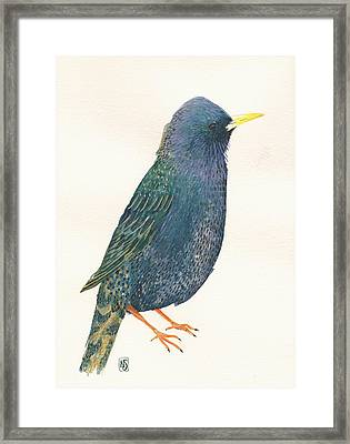 Starling Framed Print by Nina Shilling