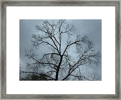Stormy Trees Framed Print by Guido Montanes Castillo