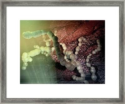 Streptococcus Pneumoniae Artwork Framed Print by Hipersynteza