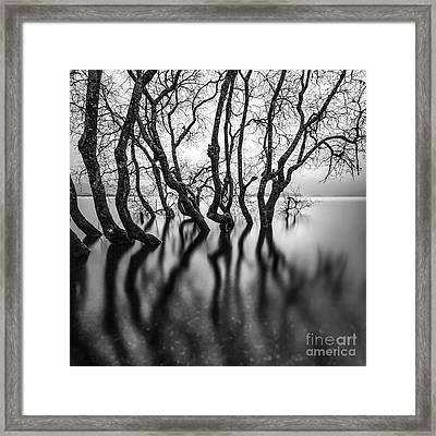 Submerging Trees Framed Print by John Farnan