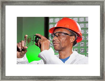 Sugarcane Industry Research Framed Print by Peggy Greb/us Department Of Agriculture
