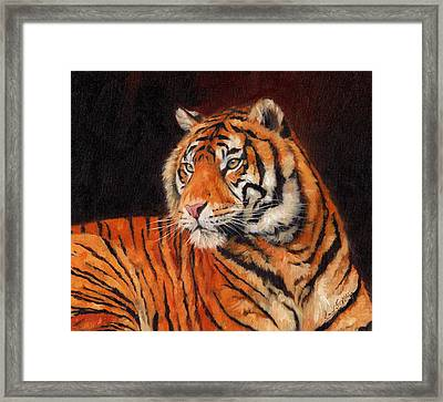 Sumatran Tiger  Framed Print by David Stribbling
