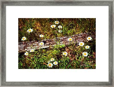 Summer Flowers On The Blue Ridge Parkway 7653 Framed Print by Dan Carmichael