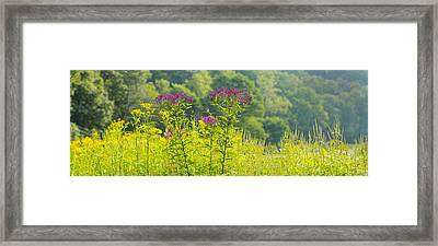 Summer Weeds, Cuyahoga Valley National Framed Print by Panoramic Images