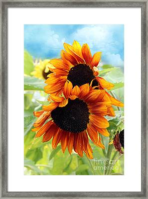 Sunflowers  Framed Print by Mark Ashkenazi