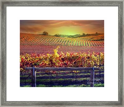 Sunrise Vineyard Framed Print by Stephanie Laird