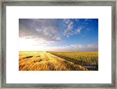 Sunset Field Framed Print by Michal Bednarek