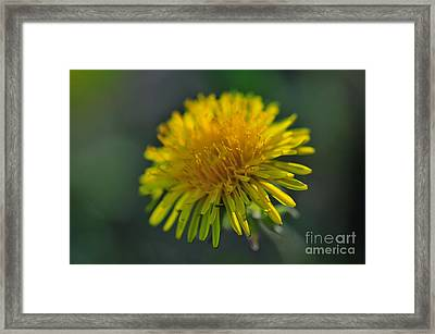 Sunshine  Framed Print by Catherine Reusch  Daley