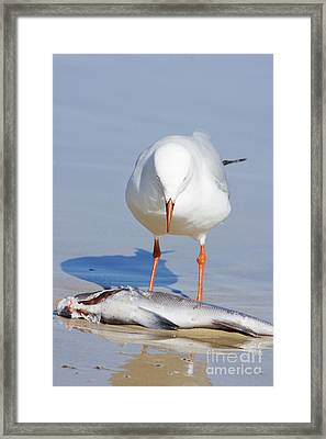 Surprised Seagull Framed Print by Jorgo Photography - Wall Art Gallery