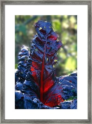 Swiss Chard Beta Bulls Blood Framed Print by Dr. Keith Wheeler