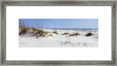 Tall Grass On The Beach, Perdido Key Framed Print by Panoramic Images