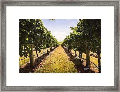 Tasmanian Vineyard Landscape. Australia Wines Framed Print by Jorgo Photography - Wall Art Gallery