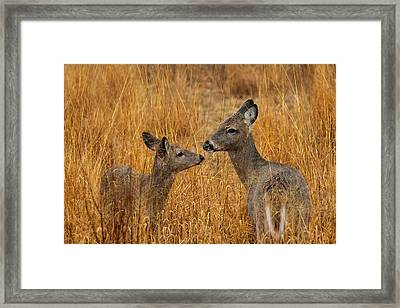 Tender Moment  Framed Print by James Marvin Phelps