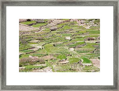 Terraced Fields Framed Print by Ashley Cooper