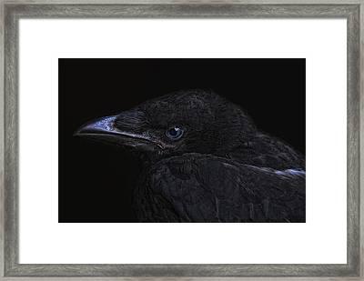 The Crow Framed Print by Joachim G Pinkawa