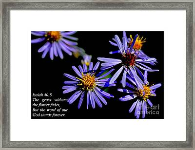The Flower Fades Framed Print by Thomas R Fletcher