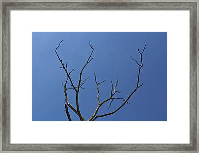 The Lightning Tree Framed Print by David Pyatt