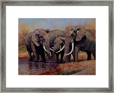 The Mud Bath Framed Print by Roelof Rossouw