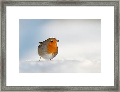 The Red White And Blue Framed Print by Roeselien Raimond