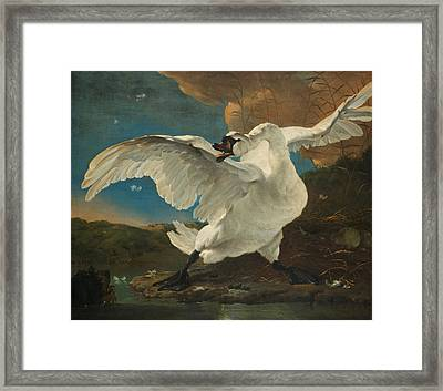The Threatened Swan Framed Print by J Beek