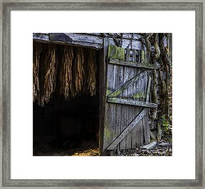 The Tobacco Cures Framed Print by Amber Kresge
