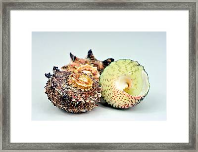 Three Shells Framed Print by Toppart Sweden