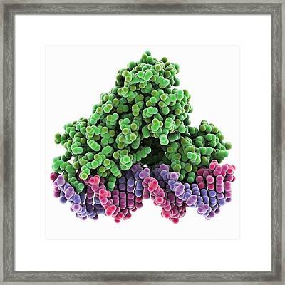 Transcription Repressor Protein And Dna Framed Print by Laguna Design